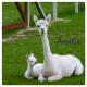 Calisto-Amélia Fil fingering Baby Alpaga
