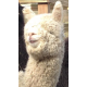"""Mary"" Fingering Baby Alpaca Yarn"