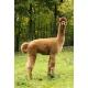"""Ourasi"" Fingering Baby Alpaca Yarn"