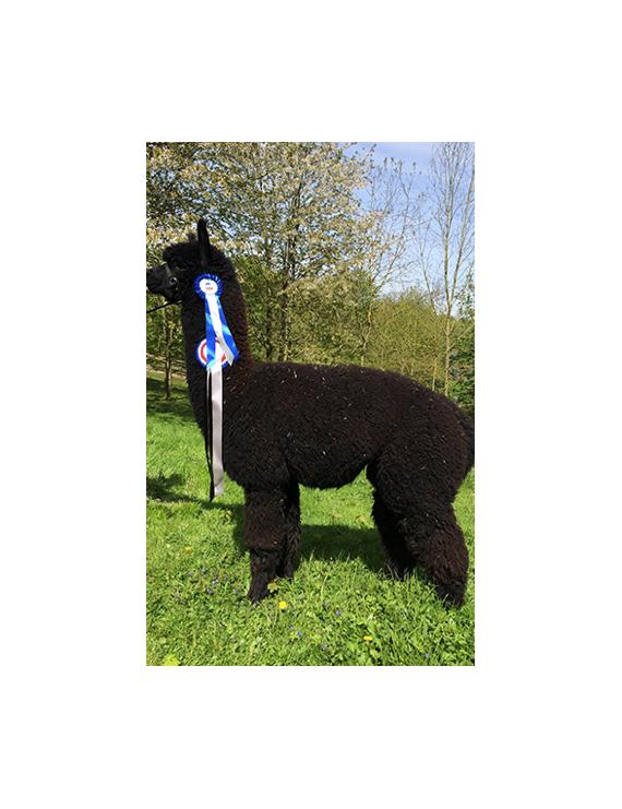 """Oracle"" Aran Alpaca Yarn"